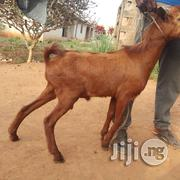 Goat Sharing | Livestock & Poultry for sale in Lagos State, Ojota