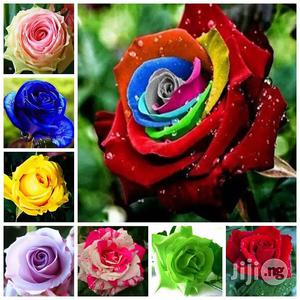 Rose Seeds And Rose Seedlings | Feeds, Supplements & Seeds for sale in Plateau State, Jos