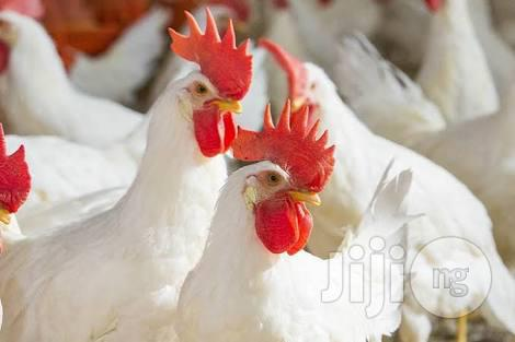 White Breeds Brolier Chicken | Livestock & Poultry for sale in Surulere, Lagos State, Nigeria