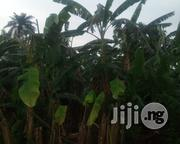 Cheap Hectares Of Farmland For Sale | Land & Plots For Sale for sale in Osun State, Isokan