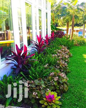 Low Cost Landscaping Services   Landscaping & Gardening Services for sale in Oyo State, Ibadan