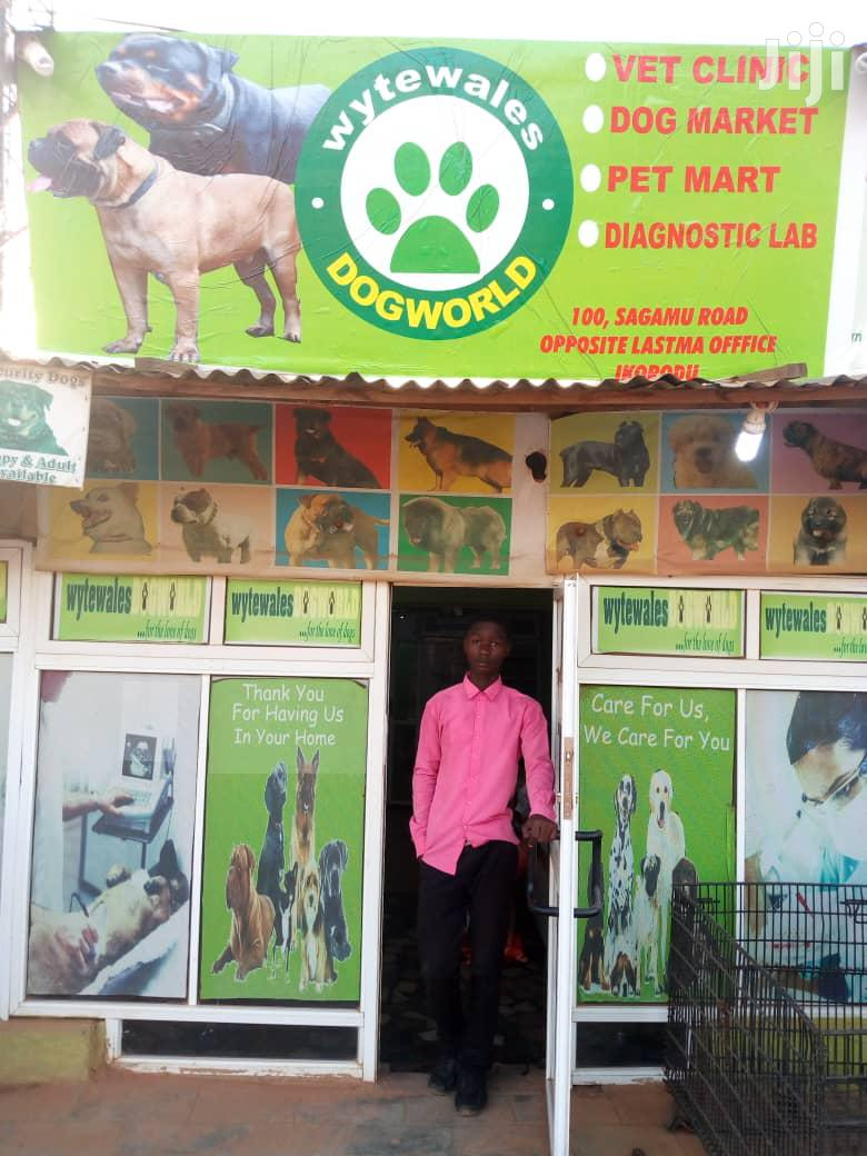 Wytewales Dogworld Veterinary Services | Pet Services for sale in Ikorodu, Lagos State, Nigeria