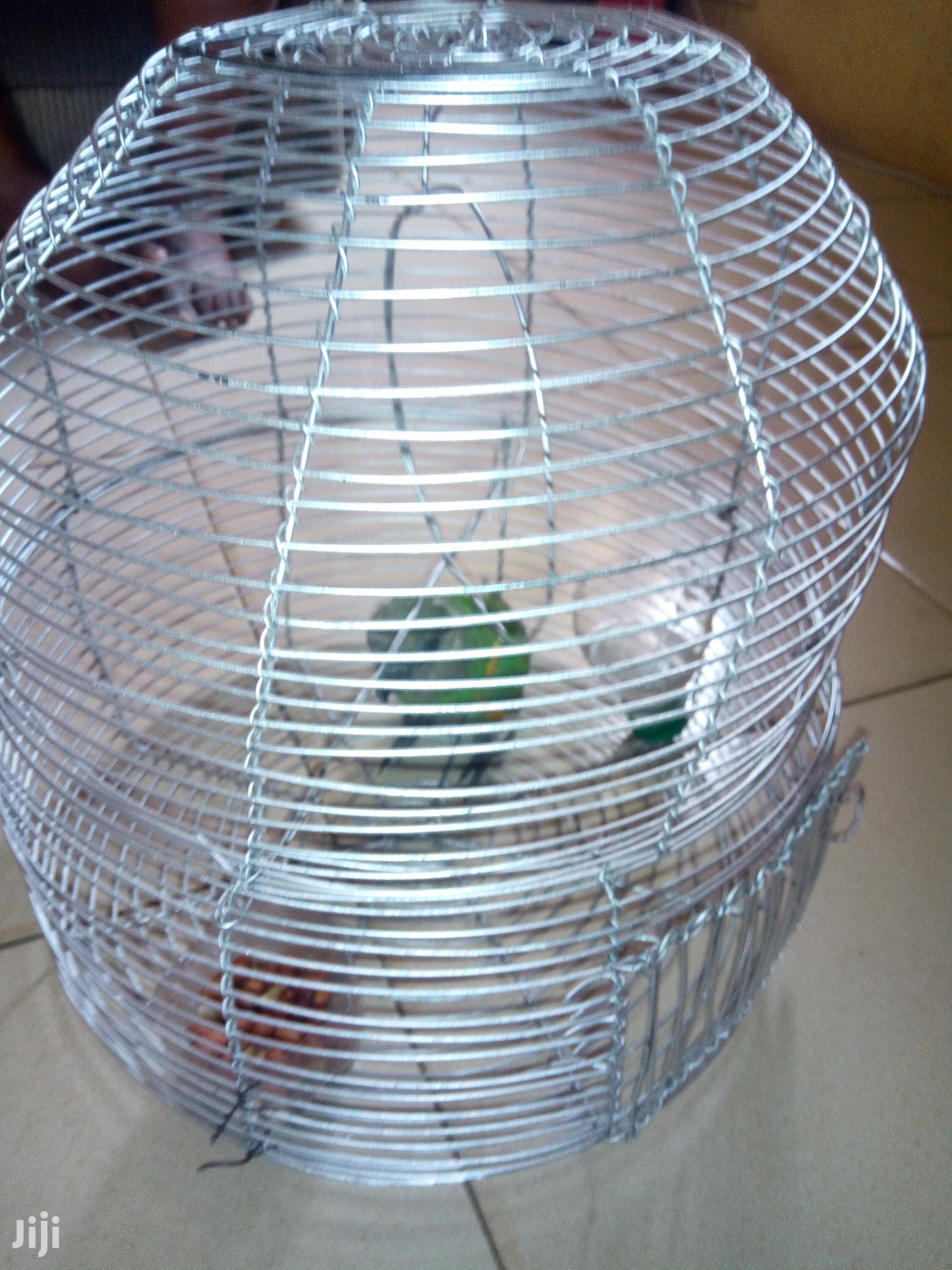 Sanegal Parrot Bird
