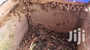 Snails , Rabbits And Grasscutters   Livestock & Poultry for sale in Oyo State, Ibadan
