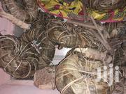Aju Mbaise Flat Tummy Herbs Lekki Lagos   Sexual Wellness for sale in Lagos State, Lekki Phase 2