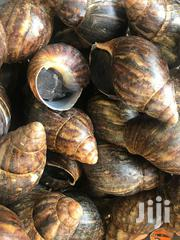 Big Snails | Livestock & Poultry for sale in Lagos State, Ikeja