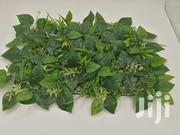 Get Your Quality Wall Plants | Garden for sale in Bauchi State, Ganjuwa