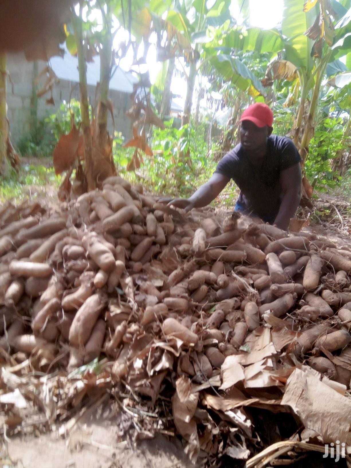 Archive: Quality Farm Management Service