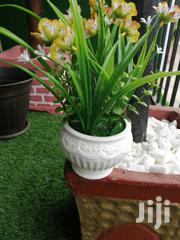 Mini Potted Flowers For Sale Nationwide | Garden for sale in Adamawa State, Mubi South