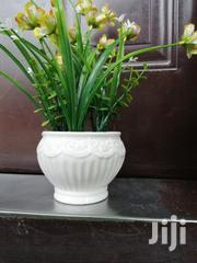 Get Affordable Beautiful Potted Flower As A Bulk Buyer Nationally | Garden for sale in Ebonyi State, Onicha