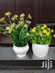 Small Cup Potted Beautiful Flowers For Sale | Garden for sale in Kano State, Bunkure