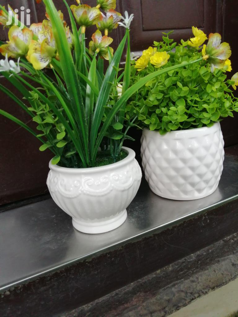 Quality Mini Potted Beautiful Flowers For Sale