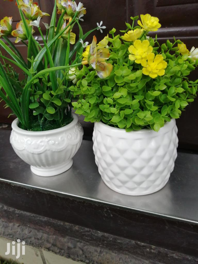 Quality Mini Potted Beautiful Flowers