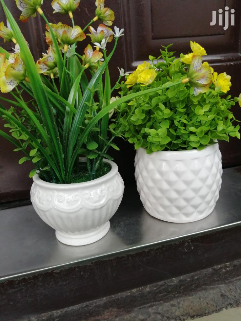 Beautiful Mini Potted Flowers For Sale