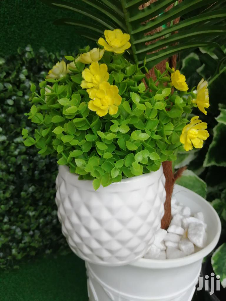 Get Affordable Potted Mini Flowers