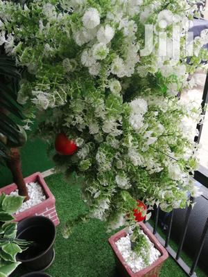 Quality Beautiful Tree Plant For Wholesale Price | Garden for sale in Abia State, Aba North
