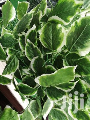 Quality Beautiful Tree Plant For Wholesale Price | Garden for sale in Abia State, Ikwuano
