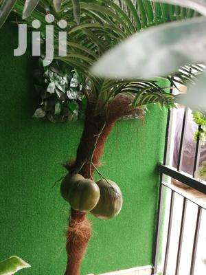 Durable Tree Plants At Affordable Prices | Garden for sale in Abia State, Obi Ngwa