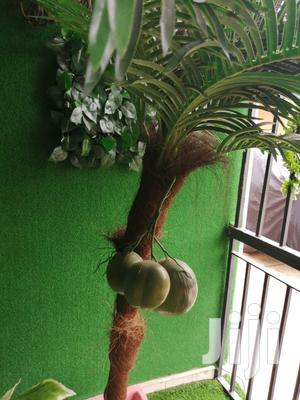 Quality Beautiful Tree Plant For Wholesale Price | Garden for sale in Abia State, Ukwa