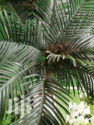 Bulk Buyers Need Nationwide For Tree Plants | Garden for sale in Abia State, Ukwa