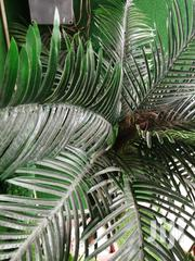 Synthetic Tree Plant For Sale | Garden for sale in Abia State, Umu Nneochi