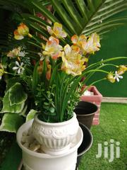 Affordable Quality Potter Beautiful Flowers At Sales | Garden for sale in Yobe State, Yusufari