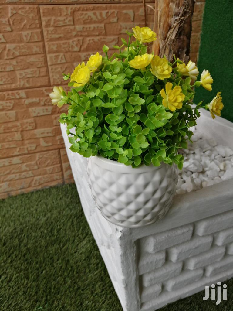 Beautify That Home With Out Potted Small Flowers