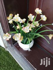 Beautified Pots Flowers For Sale | Garden for sale in Ekiti State, Irepodun/Ifelodun