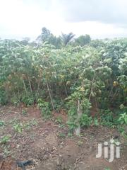 Plot Of Land Obada-oko In Ifo | Land & Plots For Sale for sale in Ogun State, Ifo