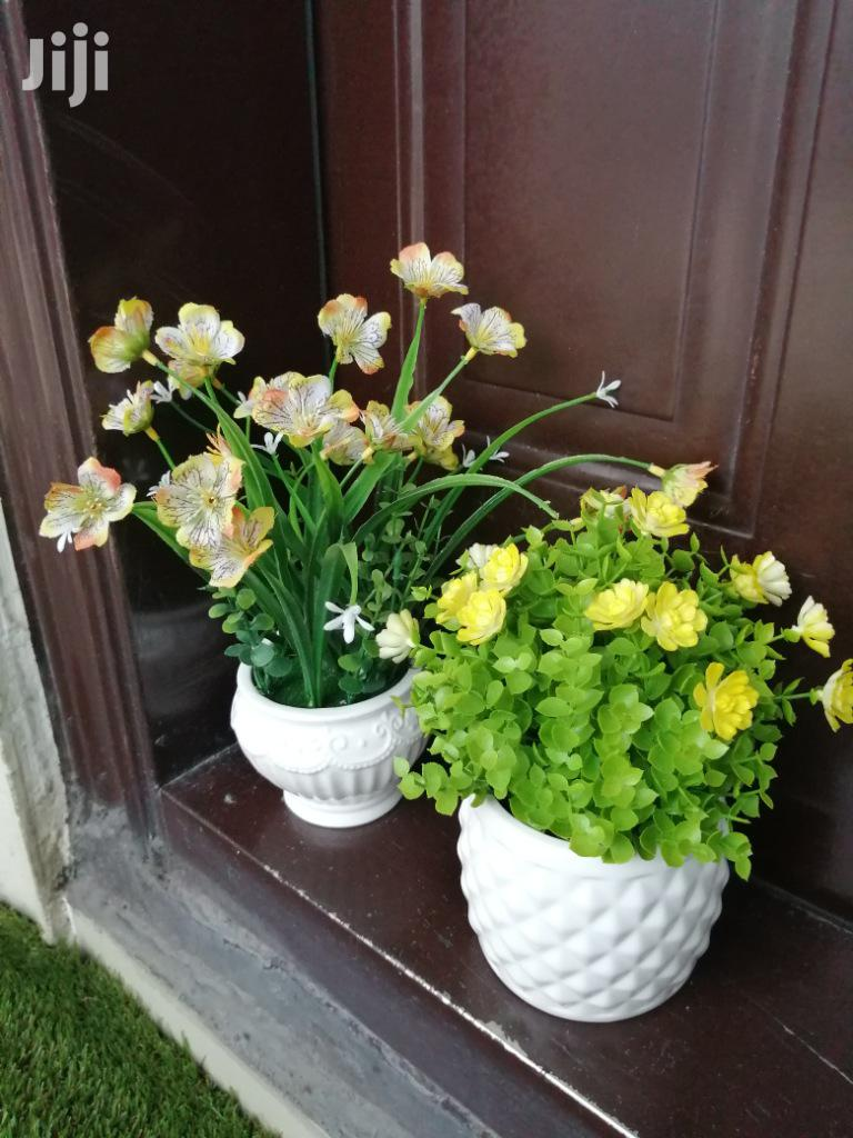 Potted Beautiful Flowers For Sale To Bulk Buyers,Order At Low Cost
