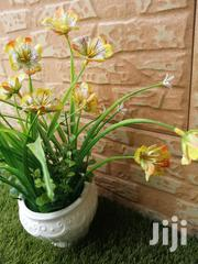 Give That House A Good Fit With Pots Flowers,Order At Low Cost   Garden for sale in Niger State, Shiroro