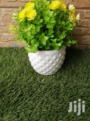 Decorative Cup Flowers At Sales | Garden for sale in Abia State, Arochukwu