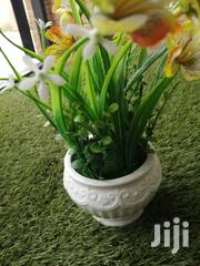 Affordable Beautiful Decorative Cup Flowers For Sale | Garden for sale in Adamawa State, Demsa