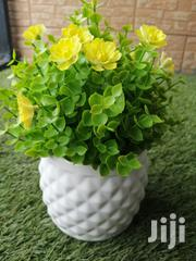 Affordable Cup Flowers For Decorations At Sales Nationwide | Garden for sale in Adamawa State, Song