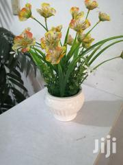Mini Beautiful Cup Flowers For Sale | Garden for sale in Borno State, Bama