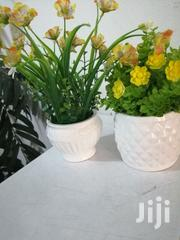 Ceramic Cup Flowers For Decor At Sales,Bulk Buyers/Re-sellers Wanted | Garden for sale in Enugu State, Isi-Uzo