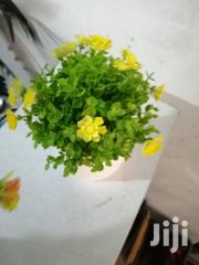 Indoor Cup Flowers For Beautification Of Offices | Garden for sale in Kaduna State, Sanga