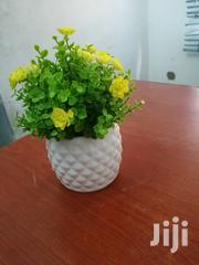 Garden Cup Flowers For Sale At Affordable Prices | Garden for sale in Kogi State, Okene
