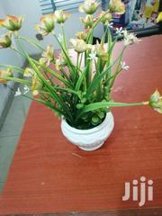 Cup Flowers For Sale At Best Prices | Garden for sale in Nasarawa State, Doma