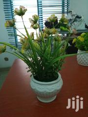 Cup Flowers For Sale | Garden for sale in Niger State, Edati