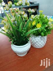Small Cup Flowers For Sale Nationwide | Garden for sale in Ondo State, Ifedore