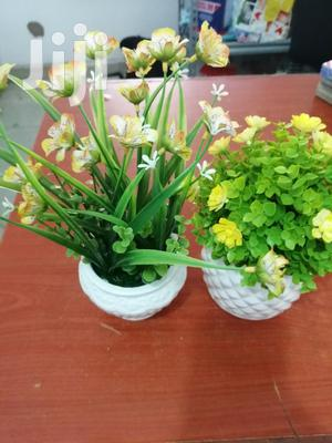 Small Cup Flowers For Sale At Best Price   Garden for sale in Osun State, Iwo