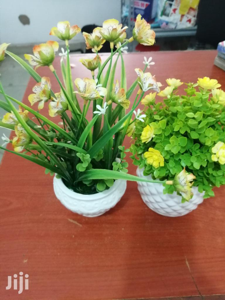 Small Cup Flowers For Sale At Best Price