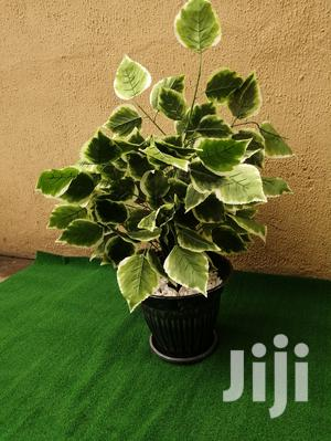 Indoor Artificial Plants | Garden for sale in Rivers State, Bonny