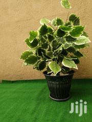 Ceramic Garden Pot | Landscaping & Gardening Services for sale in Rivers State, Emohua