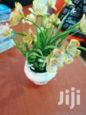 Cheap Cup Flowers For Sale At Affordable Prices | Garden for sale in Abia State, Isuikwuato