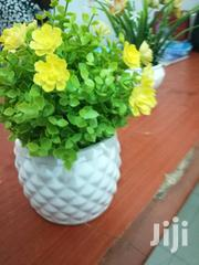 Portable Flowers For Sale   Garden for sale in Akwa Ibom State, Ibeno