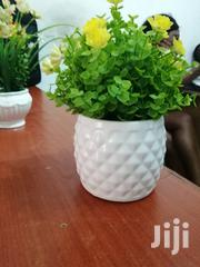Mini Cup Flowers For Beautification For Sale | Garden for sale in Bayelsa State, Nembe
