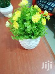 Flowers On Cups For Decorations At Sales   Garden for sale in Benue State, Agatu