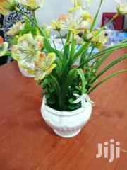 Get Beautiful Mini Cup Flowers For Beautification Of Gardens For Sales | Garden for sale in Borno State, Bama